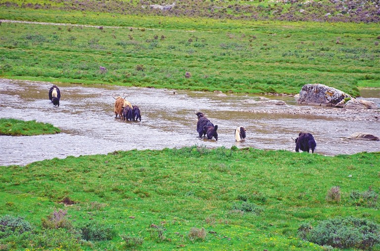 西藏山南牢固树立环保优先发展理念 切实做好环保工作