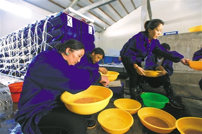 """西藏日喀则:小""""金""""鱼 促增收"""