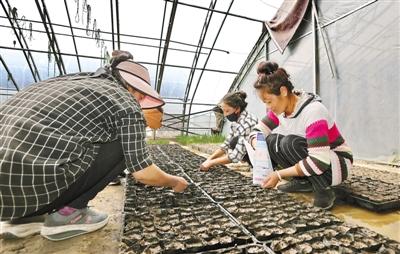 西藏山南:科技兴农 产业富农