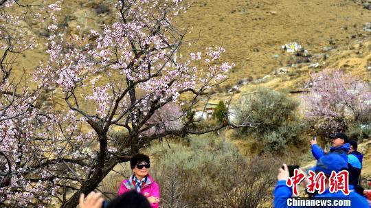 西藏拉萨古寺桃花盛开