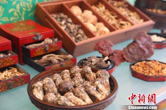 西藏林芝迎来松茸美食文化旅游盛宴