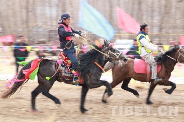 赛手为马而来,彰显赛马文化的魅力