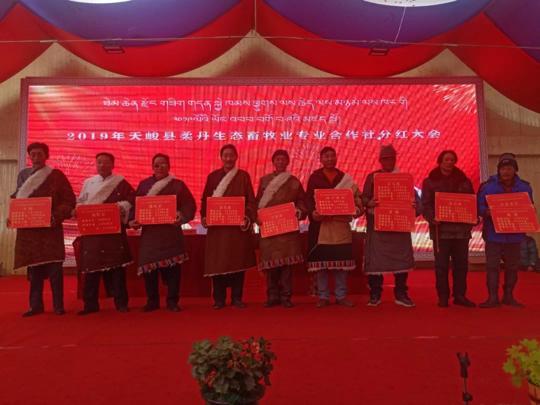 青海天峻县柔丹生态畜牧业专业合作社牧民分红30多万元