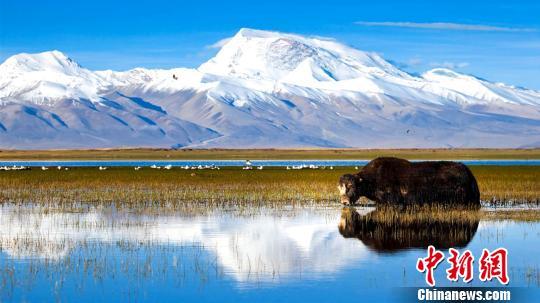 西藏阿里地区独特的自然风光及具有深厚文化底蕴和举世闻名的人文景观,吸引着越来越多的游客走进阿里。2018年,该地区旅游收入首次突破了10亿元大关。资料图:阿里地区独特的自然风光。阿里地委宣传部供