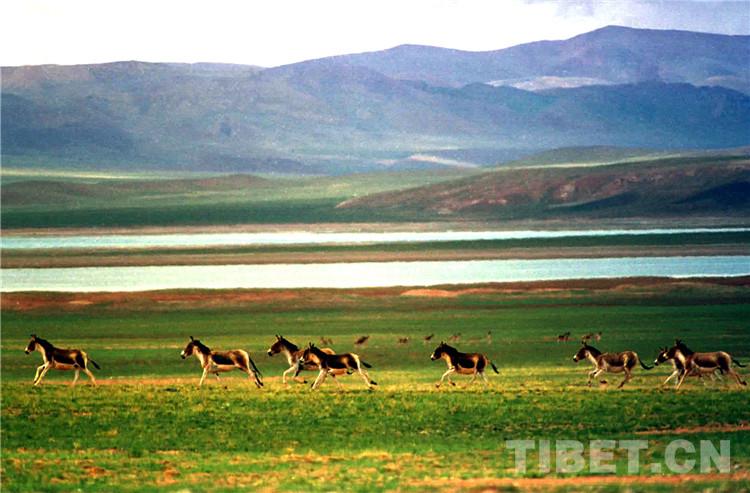 世界海拔最高的野生动物王国