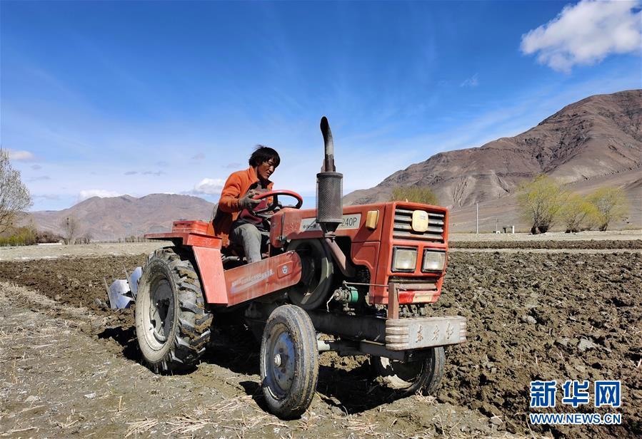 (经济)(2)西藏日喀则:农民春耕忙