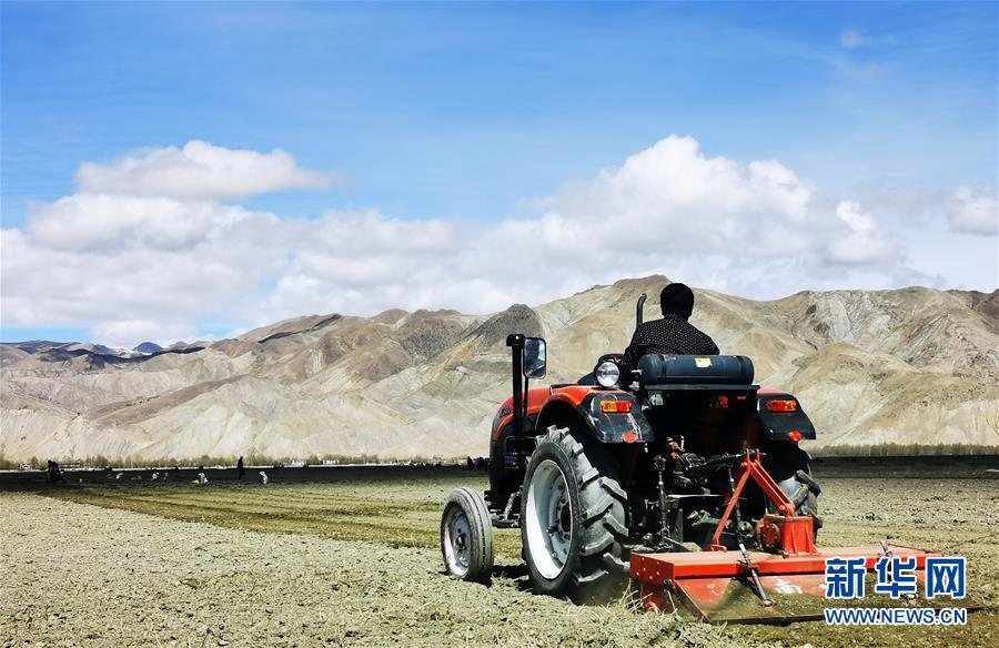 (经济)(4)西藏日喀则:农民春耕忙