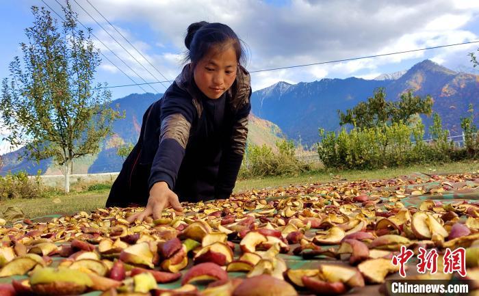 图为通麦村村民巴桑拉姆晾晒切片苹果。 贡桑拉姆 摄
