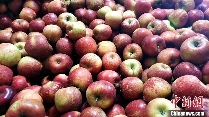 图为通麦村村民巴桑拉姆家待装箱的苹果。 贡桑拉姆 摄