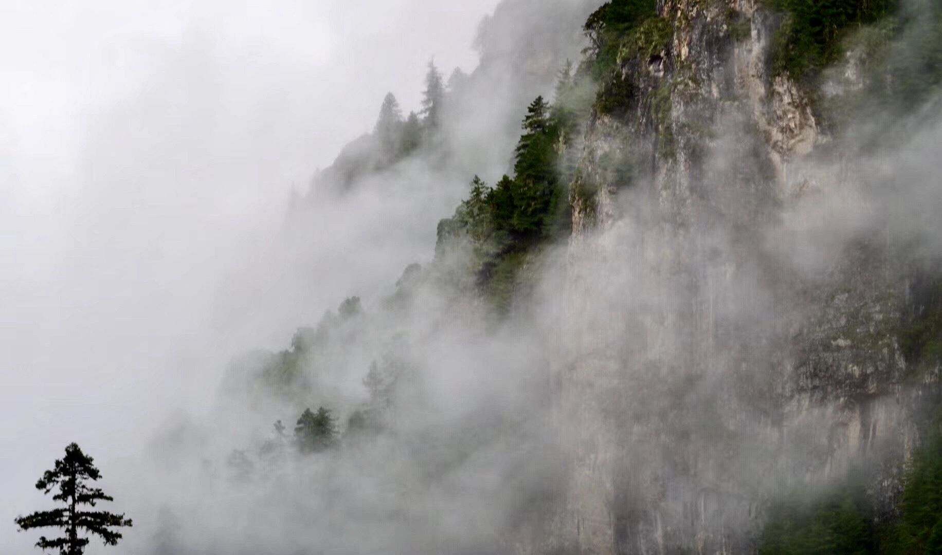 图6.林芝察隅山中的晨雾.JPG