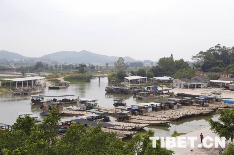 【新时代?福气斑斓新内地】探望中国蚝乡养殖产业看高气质生蚝何以长成