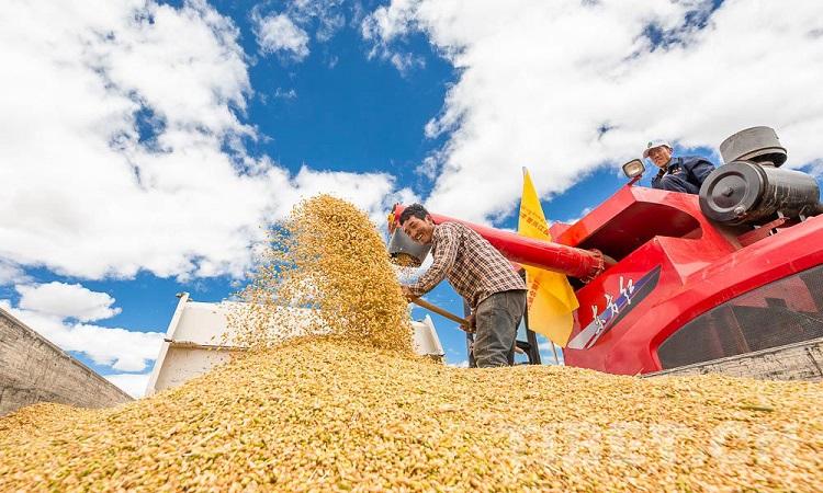 日喀则人口_西藏日喀则市奋力开创乡村振兴新局面持续增强脱贫人口致富能力