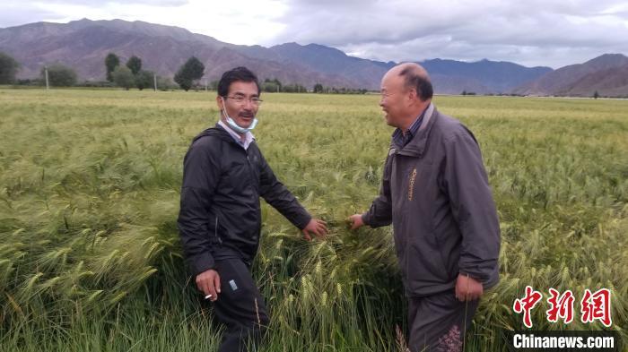 """《【恒达在线登录注册】西藏农民眼中的尼玛扎西:他是扎根田间的""""青稞博士""""》"""