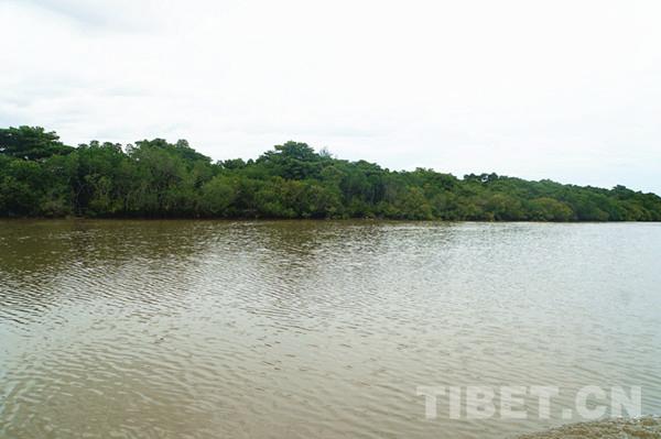 图为东寨港国家自然保护区。