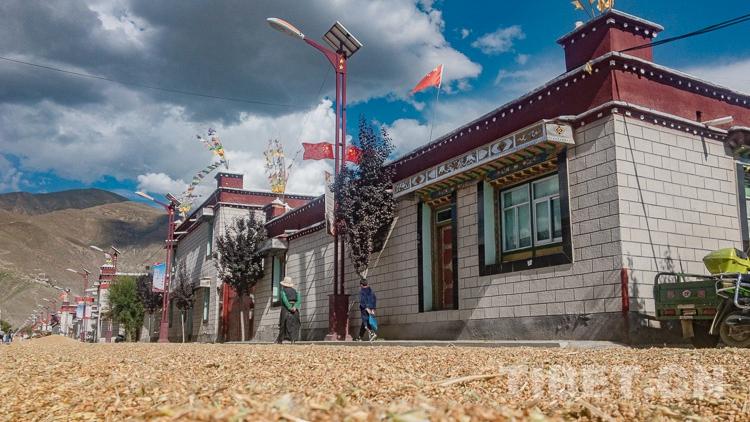 【新时代•边疆行】农忙时节,克松村的达瓦却很悠闲