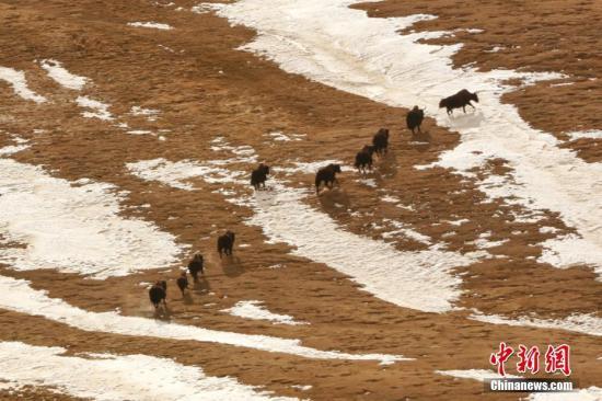 国家公园示范省青海强化保护野生