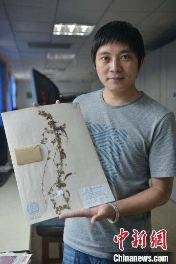 """中国东喜马拉雅山南坡发现""""隐世""""百年的贝叶芒毛苣苔"""