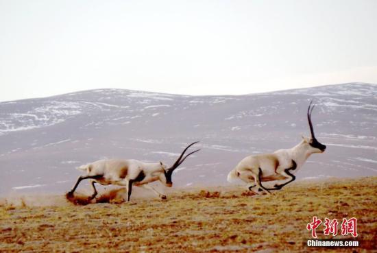 青海三江源地区生态保护成效初显