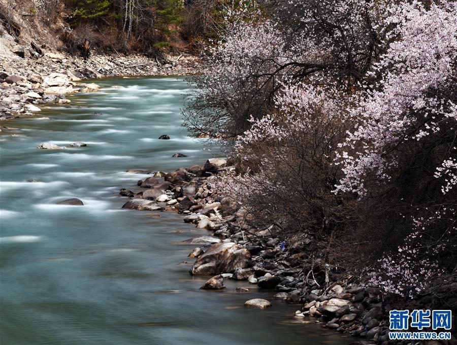 (新华视界)(2)西藏:察隅河谷春光美
