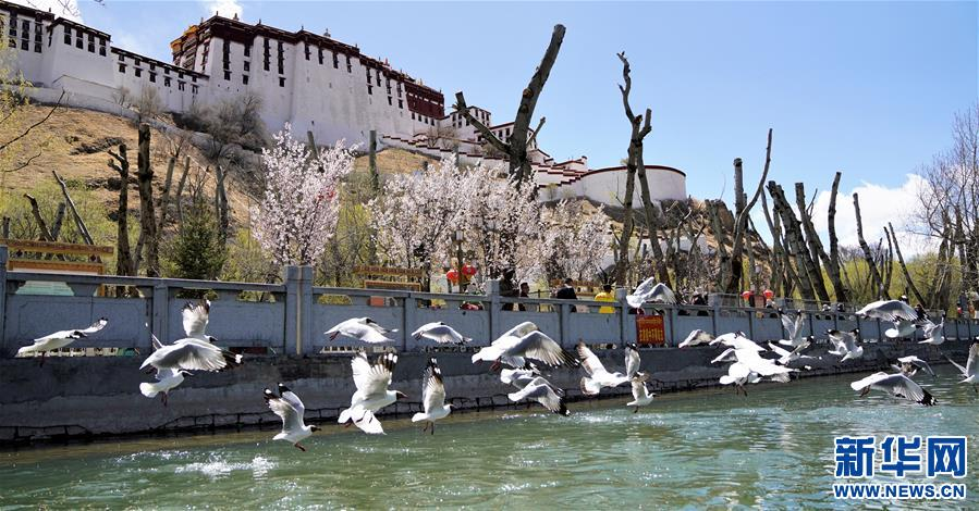 (环境)(3)春到拉萨