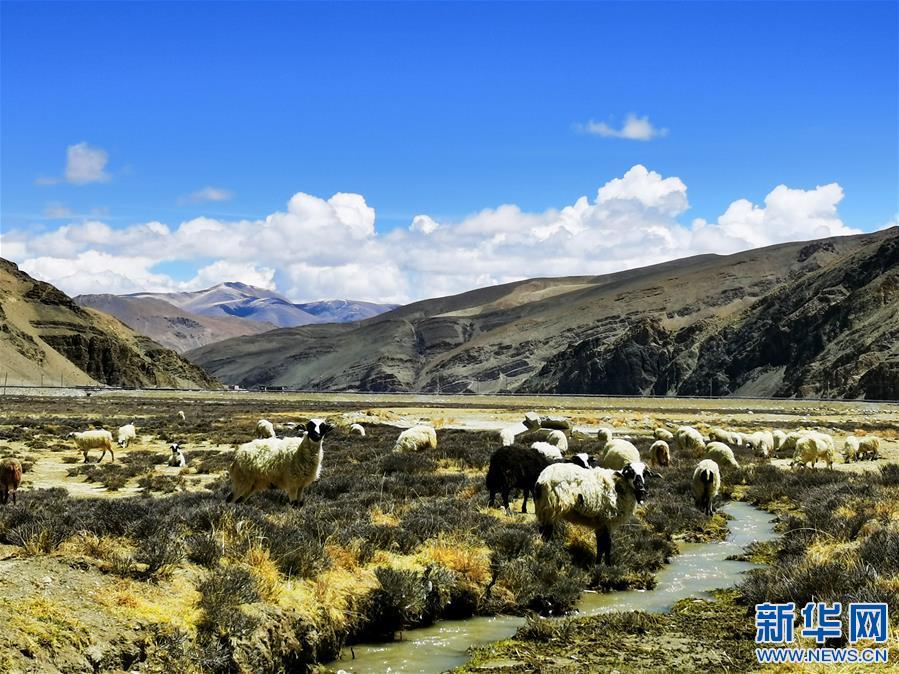 (2020珠峰高程测量)(2)珠峰自然保护区掠影